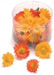 Miniaturblumen Margerite orange